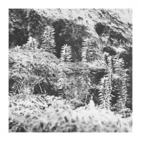 Acronym  /  Korridor - Untitled
