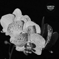 Assorted Orchids - Assorted Orchids