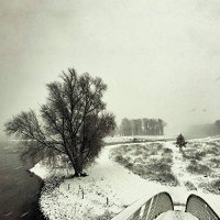 Beequeen -Winter
