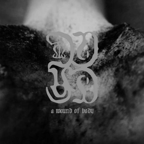Common Eider  /  King Eider - A Wound Of Body