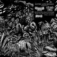 Cryptic Brood  &  Night Hag -Swollen With Rancid Phlegm