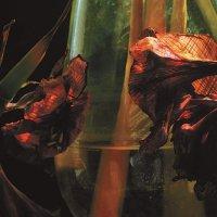 Hayvanlar Alemi - Psychedelia In Times Of Turbulence