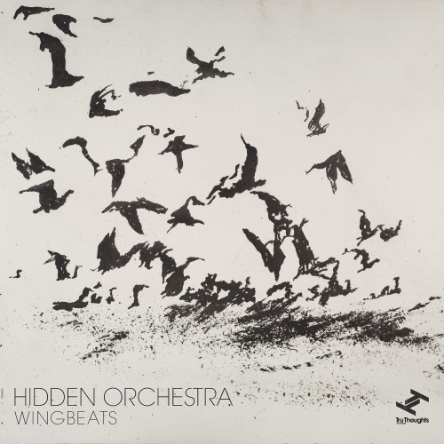 Image result for hidden orchestra wingbeats