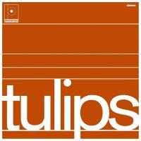 Maston - Tulips