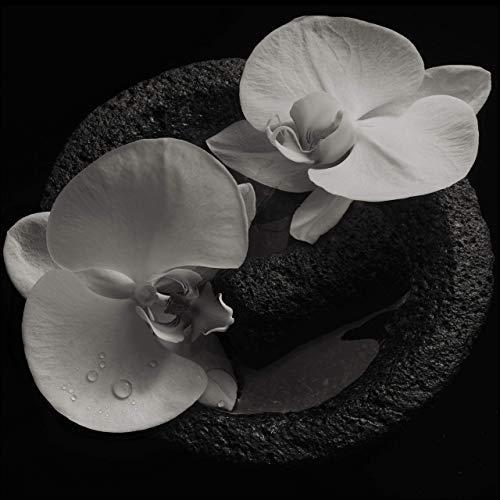 Mike & Jean-Claude Vannier Patton - Corpse Flower