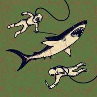 Shepparton Airplane - Sharks