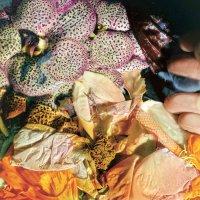 Soela - Genuine Silk